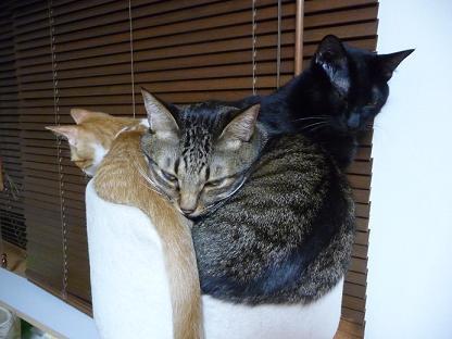 ぎゅうぎゅう猫団子