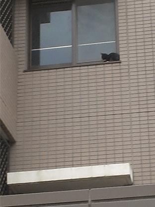 子猫レスキュー1