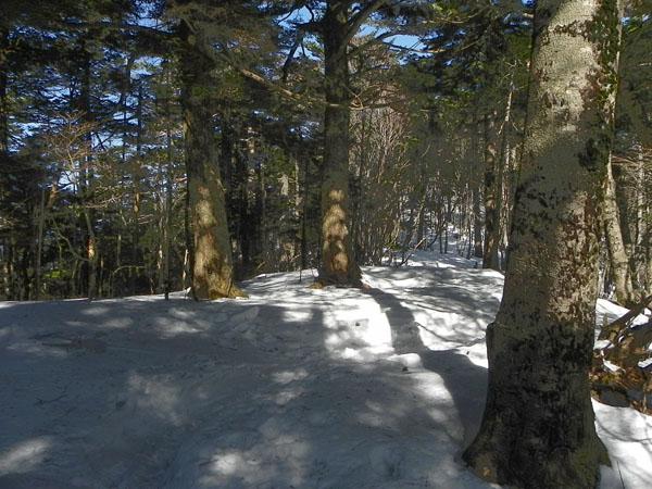 A007-13-11:27樹林