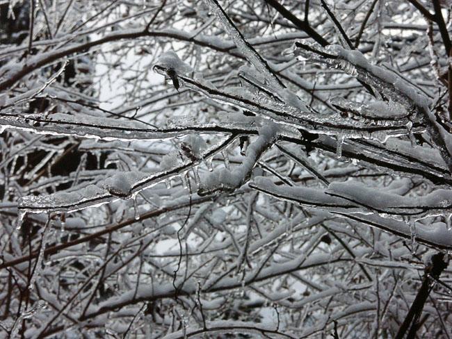A011-7雨氷