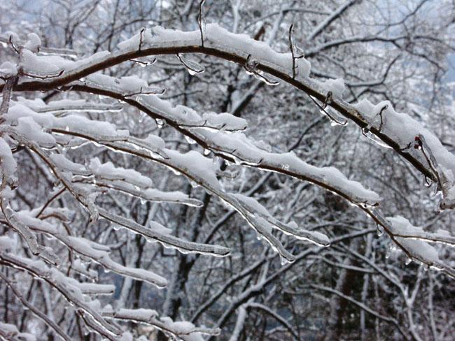A011-15霧氷