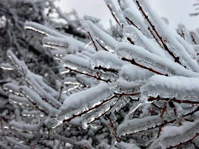 A011-18霧氷