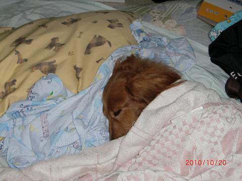ママのおふとんで、寝んこのふり