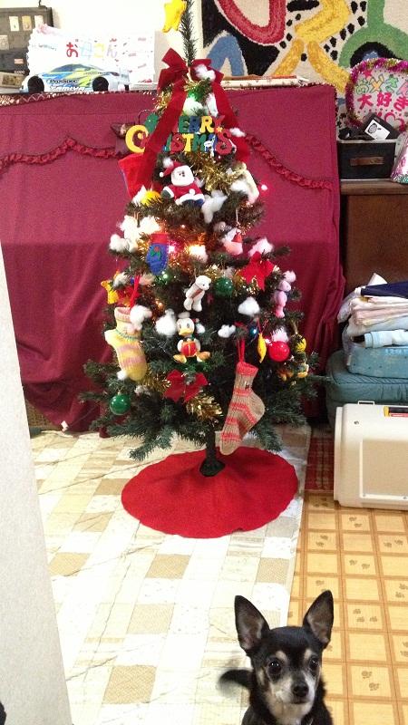 2012-12-02.jpg