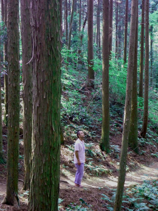 杉の山道と達蔵