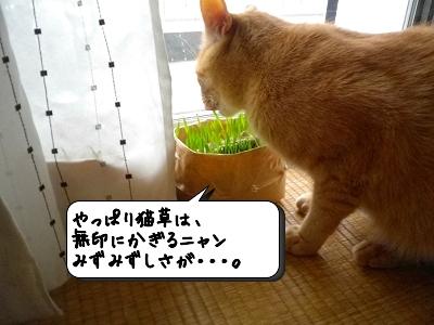 猫草うまし❤
