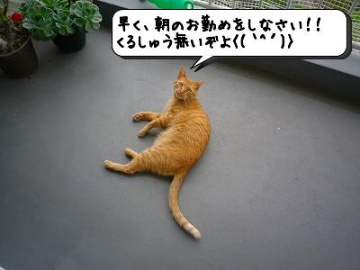 20120510_175255.jpg