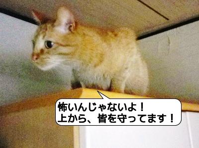 20120510_175809.jpg