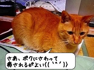 20120516_223948.jpg