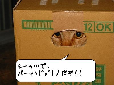 20120519_202603.jpg