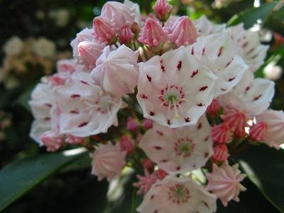 かわいい花1