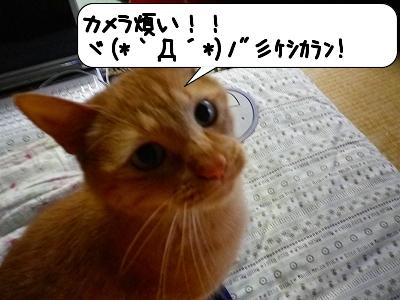 20120523_182016.jpg