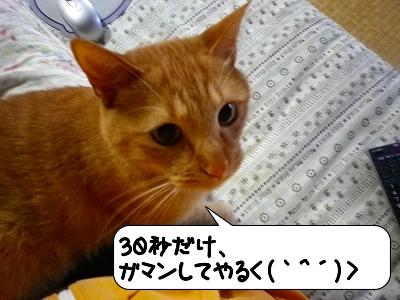 20120523_182146.jpg