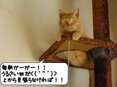 20120524_222130.jpg