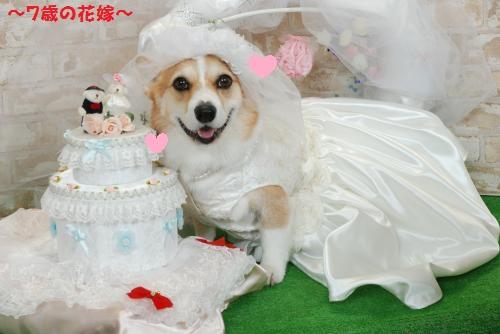 花嫁節ちゃん7歳