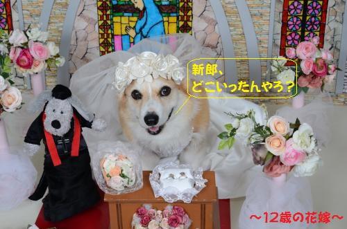 花嫁節ちゃん