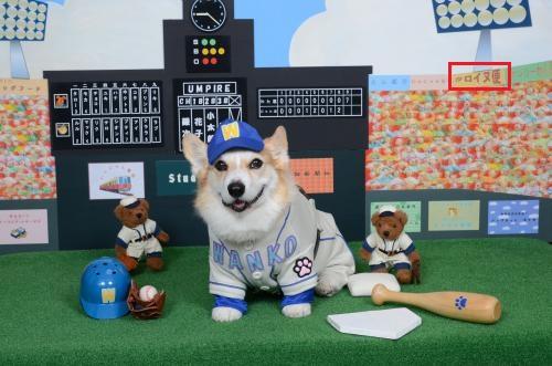 野球選手節ちゃん