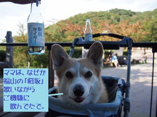 桜川サイダー