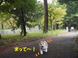 琵琶湖への歩道で