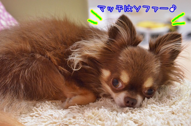 DSC_6711.jpg