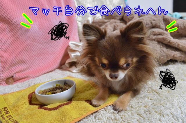 DSC_7096_20141028203817074.jpg