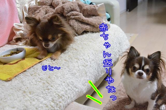 DSC_7097.jpg