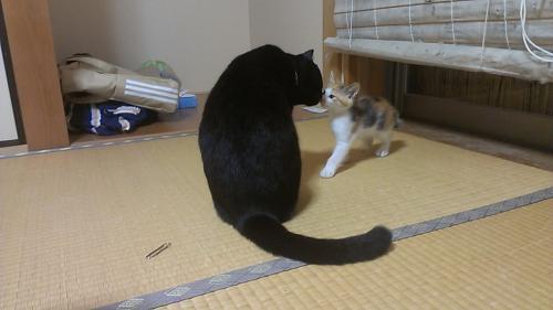 ルイ先住猫さん