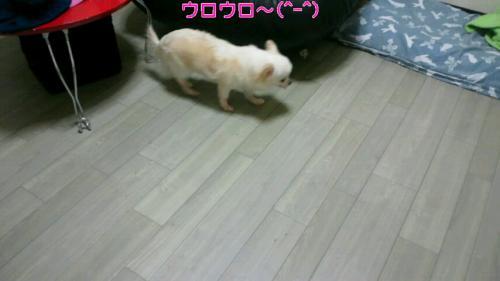 emi_20120810153532.jpg