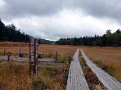 草紅葉の大江湿原