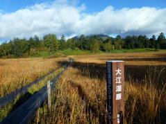 朝日に映える大江湿原