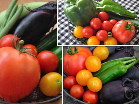 収穫野菜_01