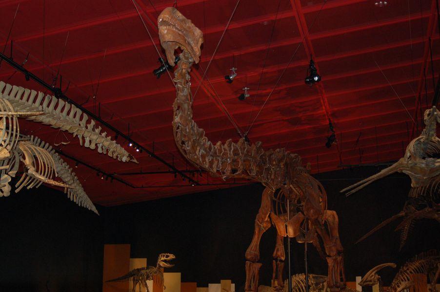 全長のおよそ半分が首という、雷竜のなかでも特異的な姿