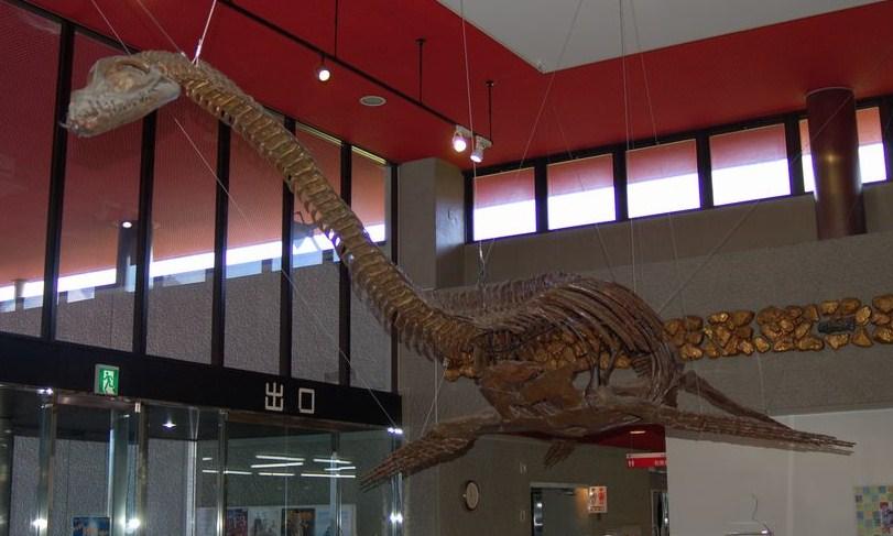 模式標本は国立科学博物館に保管されており、こちらはレプリカ