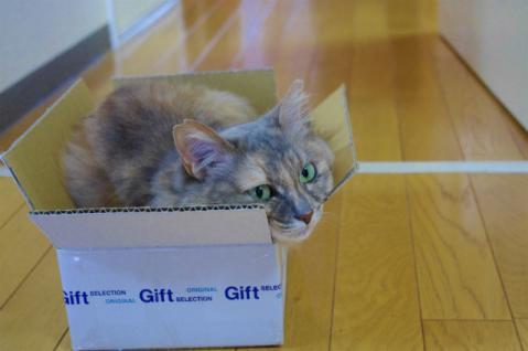 新しい箱ねこ