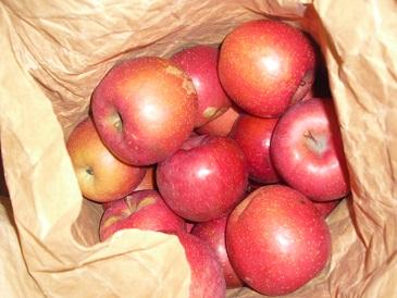 りんご20141130