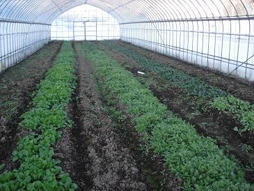 ハウス野菜 20141219
