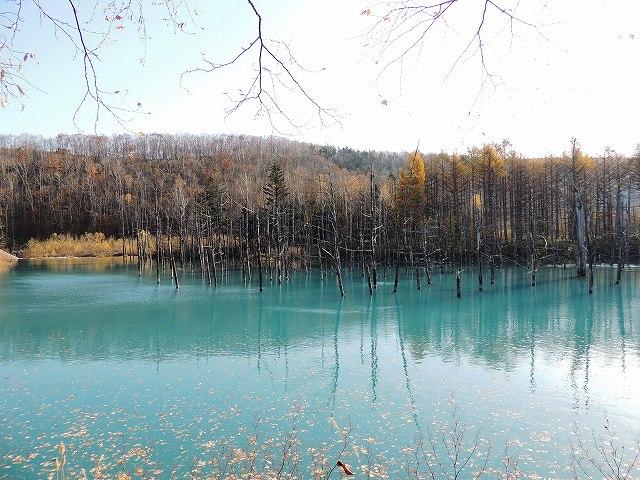 s-青い池、本日。