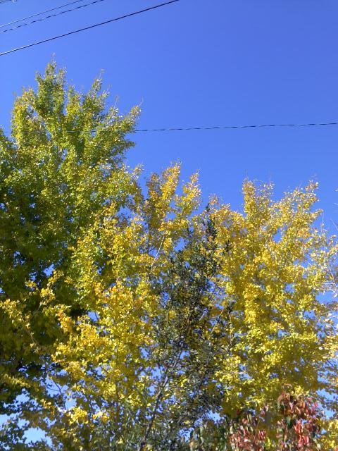 秋ですね  2