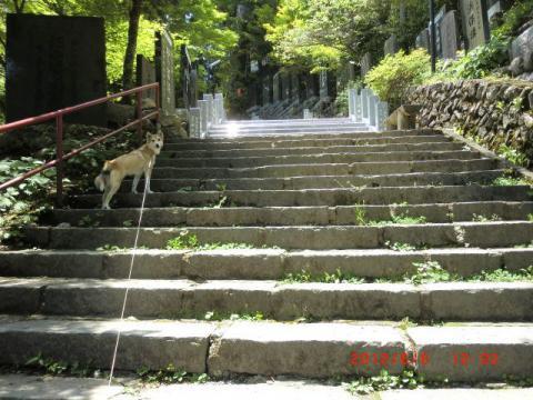 階段へっちゃら