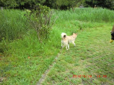 沼のまわりの遊歩道