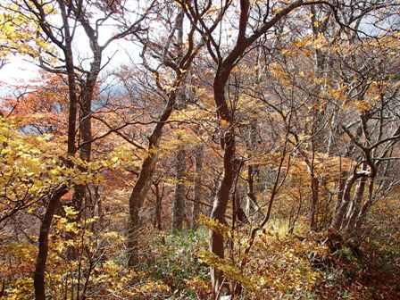 稜線の黄葉