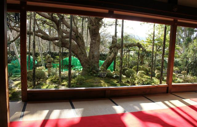 kyoto12_0297.jpg