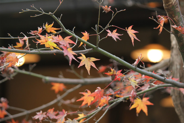 kyoto12_0530.jpg