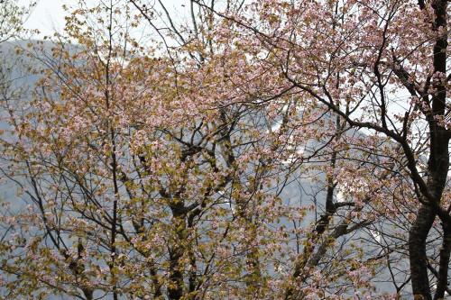 tanigawa5_457.jpg