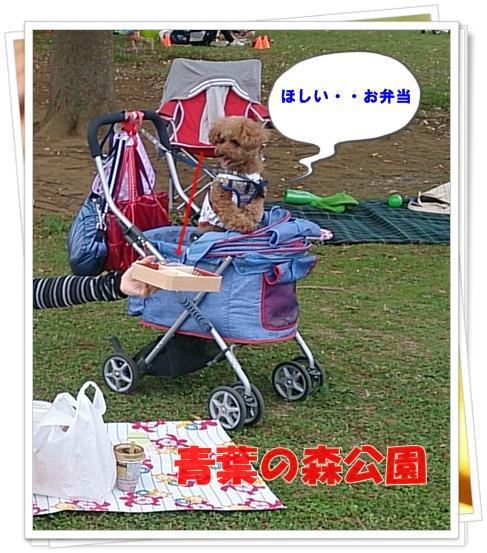 DSC_0134-crop.jpg