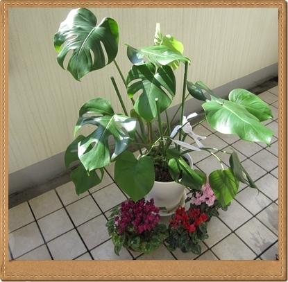 IMG_3970-crop_20120507221200.jpg