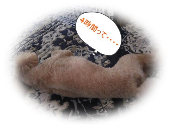 IMG_4054_20120523224805.jpg