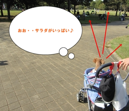 IMG_5019-crop.jpg