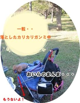 IMG_5022-crop.jpg