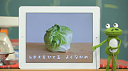 lettucelettuce.jpg